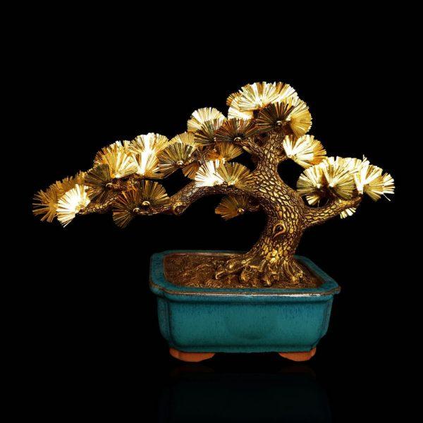 cây tùng phong thuỷ mạ vàng