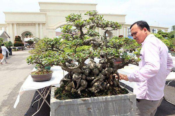 quà tết doanh nhân cây cảnh bonsai